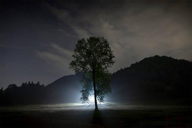 Čudno i usamljeno drveće - Page 10 Albero_solitario_a_bione_di_andrea_pettinari